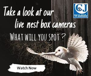 CJ Wildlife Webcam_300x250