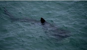 how to watch basking sharks in irleand s wildlife sharks are back