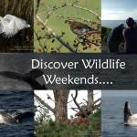 Wildlife and nature tours Ireland