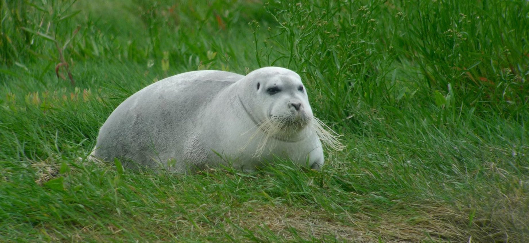 related pictures seal arctic - photo #39