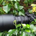 Tamron SP 150-600mm F/5-6.3 Di VC USD G2 Review