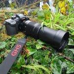 Panasonic Lumix GH5 & Leica DG Vario-Elmar 100-400mm
