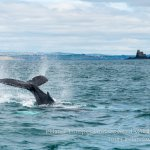 Ireland's Wild South Coast: book now and save
