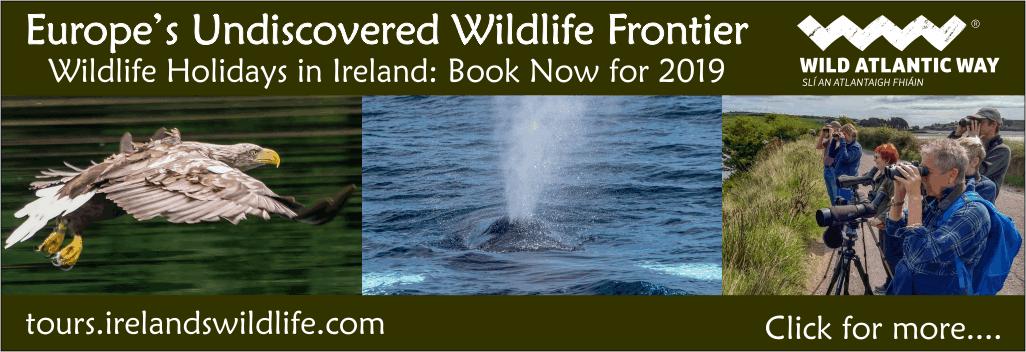 Ireland's Wildlife | Irish wildlife, nature and biodiversity