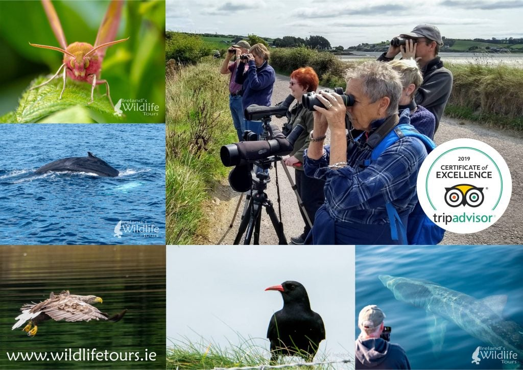 2019 Certificate of Excellence for Ireland's Wildlife Tours