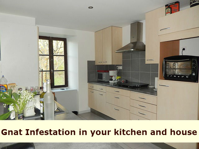 Best 20 Gnats In Kitchen  Best Home Ideas and Inspiration