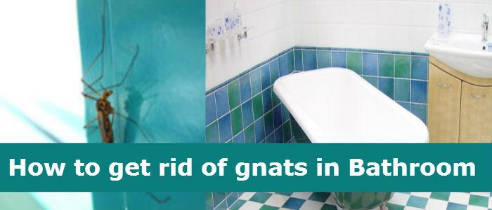 Gnats in Bathroom How to get rid of gnats in Bathroom