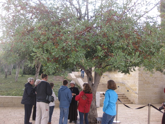 Irena's tree at Yad Vashem. Picture taken by Judith Santos, a friend of the Karlen's (good friends of Life In A Jar).