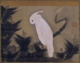 Itô Jakuchû (Japanese, mid-Edo period, 1716–1800): White Cockatoo on a Pine Branch, late 18th century. Hanging scroll; ink and color on silk. Image: 40.1 x 55.6 cm (15-13/16 x 21-7/8 inches) Overall: 138 x 70 cm (54-5/16 x 27-9/16 inches). Museum of Fine Arts, Boston, Massachusetts, USA. Image: © 2015 Museum of Fine Arts, Boston.