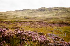 Hochmoore zwischen Loch Tula  /  Loch Nah-Achlaise