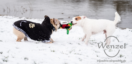 Hunde spielen im Schnee