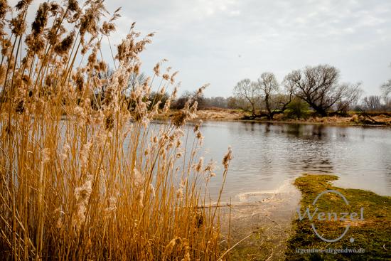 Blick vom Deich auf den Prester See