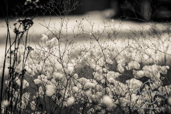 Park, Magdedburg, Elbufer –  Foto Wenzel-Oschington.de