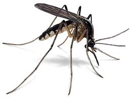 Health Ministry restates that Jamaica remains malaria free