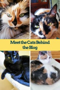 Meet the Cats Behind the Blog