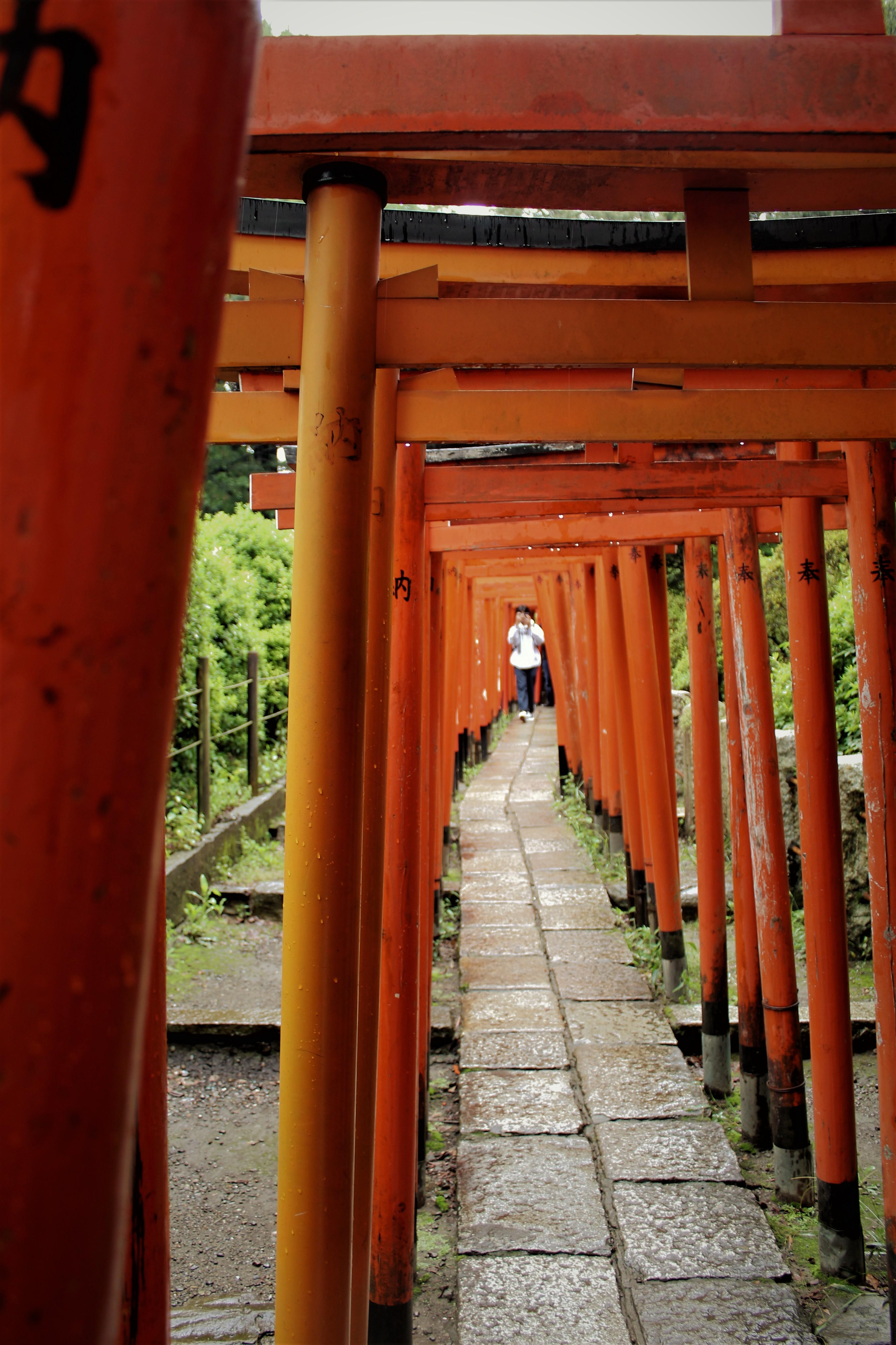 Fila di torii