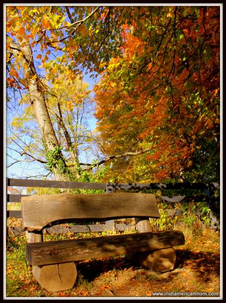 Bench Under A Tree In Fall
