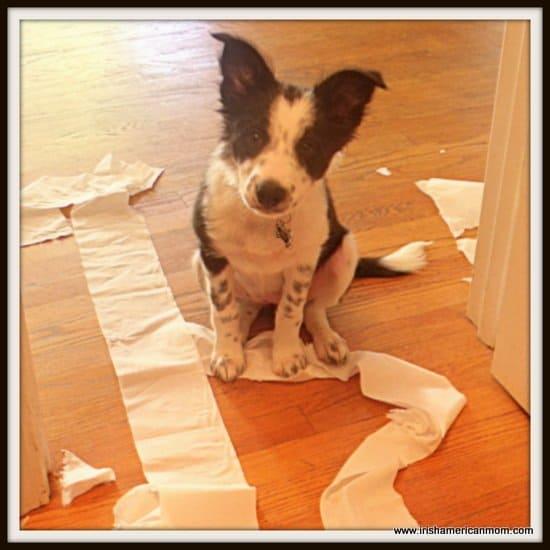 Puppy Toilet Paper Trouble