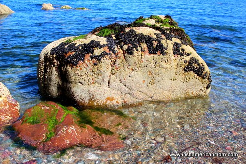 Barnacle covered rock