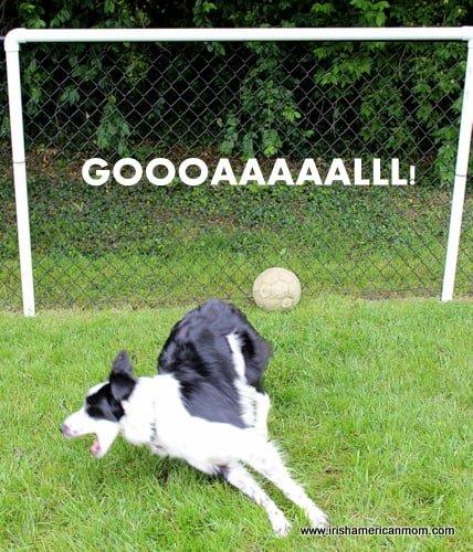 Border Collie Scores A Goal
