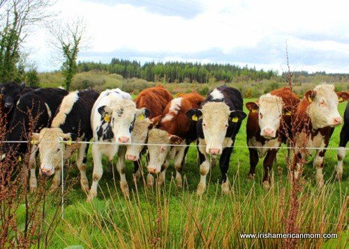 http://www.irishamericanmom.com/2015/02/19/irish-farm-safety/