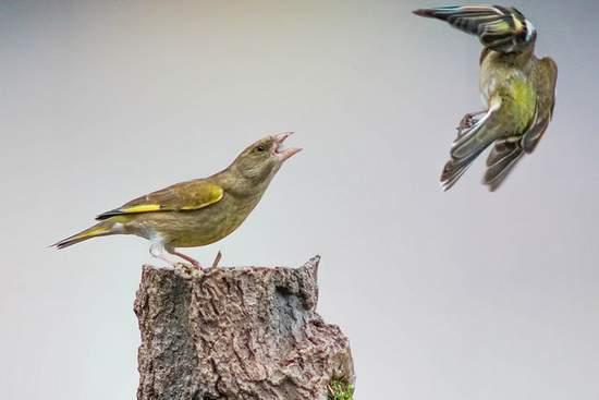 Bird blown away