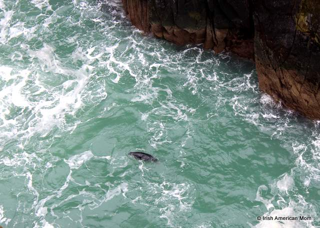 Seal at Mizen Head