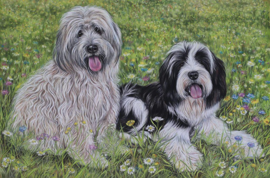 Tibetan Terriers Painting