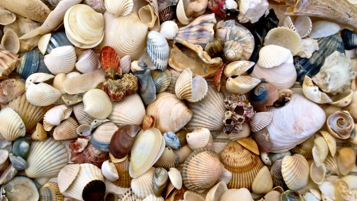 Get creative with some seaside treasures