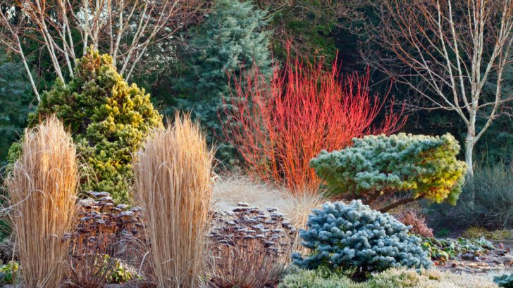 It's time for gardeners to prepare for winter
