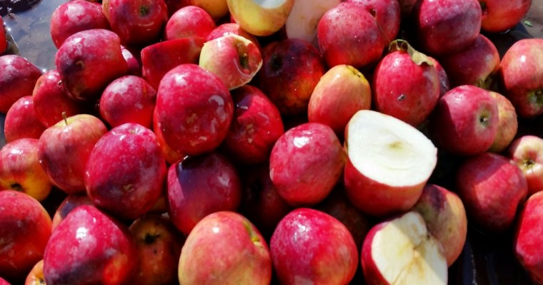 Hard Cider – From Tree to Bottle