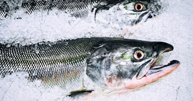 Salmon – Two Favorites