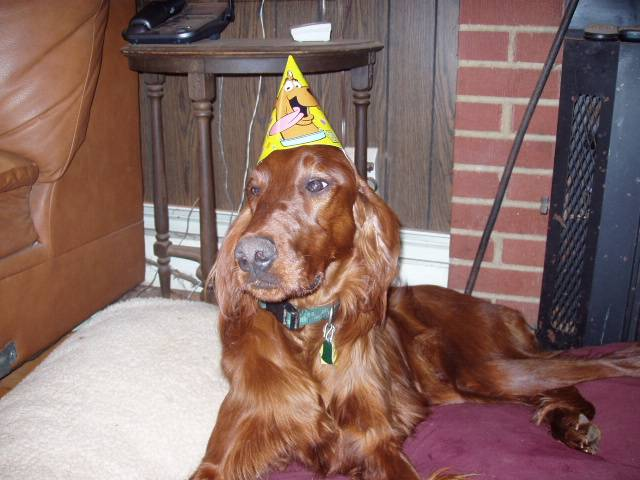 Patrick Day Irish Setter Rescue in NJ