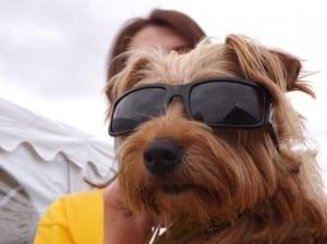 dog2 (1)
