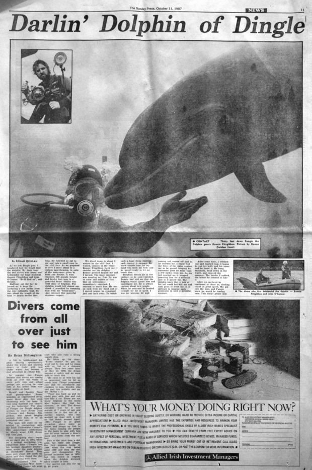 Sunday Press Story about Fungie in 1987. Photograph: Ronan Quinlan