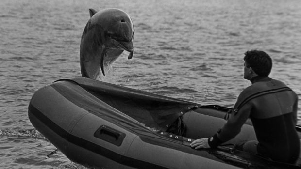 Fungie the DIngle Dolphin. Photograph: Ronan Quinlan