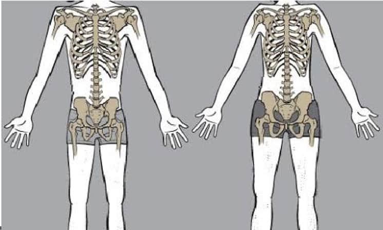 skinny-fat-genetics skeleton