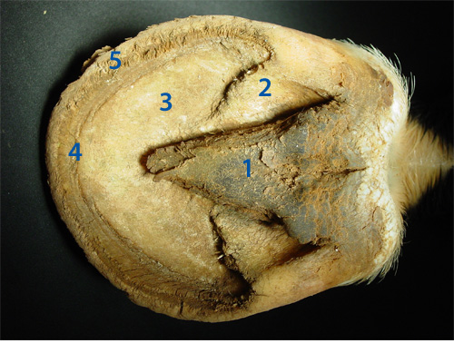 labeled frog anatomy diagram squirrel organs horse hoof taught with clear, well photos and simple explanation