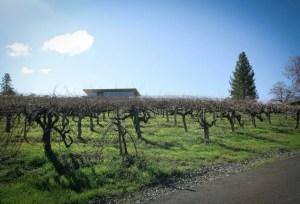 Iron Hub Winery Vineyard Entrance