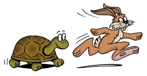 Image result for tortoise and hare