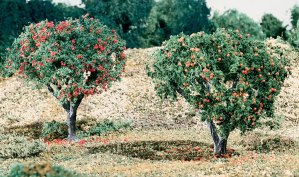 Woodland Scenics ~ Fruit ~ 2 Colors ~ 2 Bags ~ T47