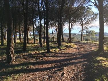 l'ultimo tratto alto dell prima tappa di Pareti, si entra nel bosco per poi discendere alla polveriera