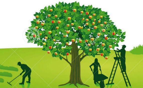 agricoltura contadina accesso alla terra e giovani in agricoltura
