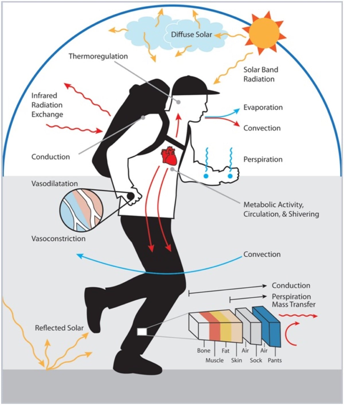 Handle The Heat Heat Acclimation For Endurance Running