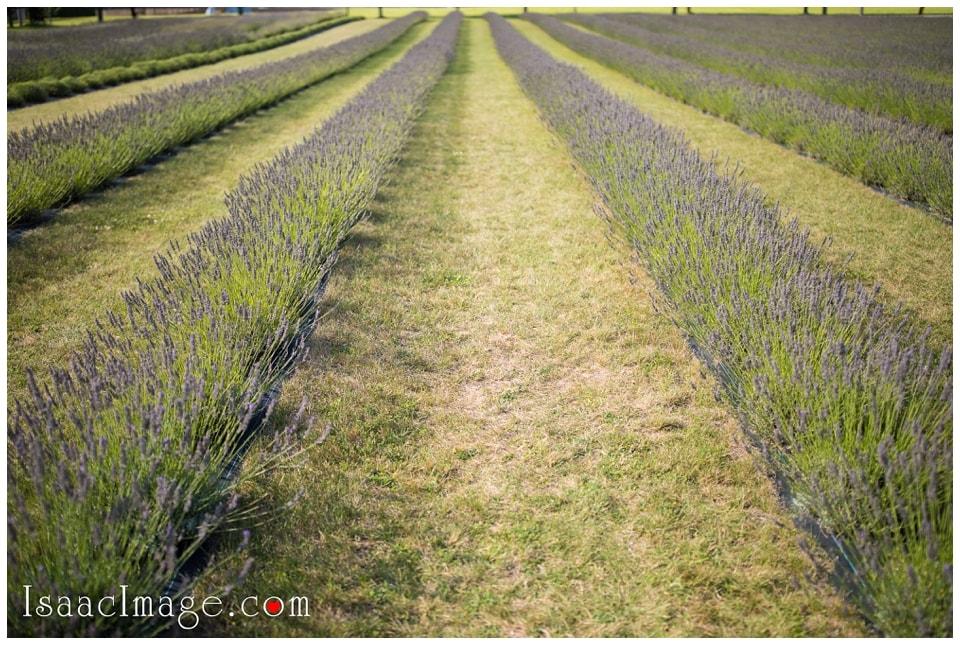 Bonnieheath estate lavender winery Engagement_3379.jpg
