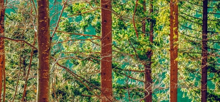 une forêt praticable