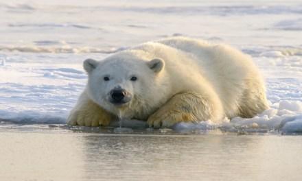 Por qué debe importarnos el Ártico