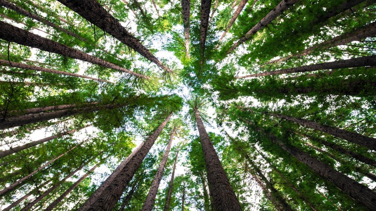 ¿Y si los árboles no fueran una solución milagrosa contra el cambio climático?