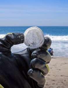 Έντομα κατά των πλαστικών στους ωκεανούς