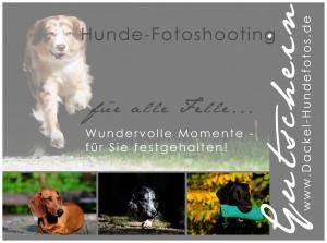 Gutschein Hunde-Fotoshooting mit Petra Spoerle-Strohmenger